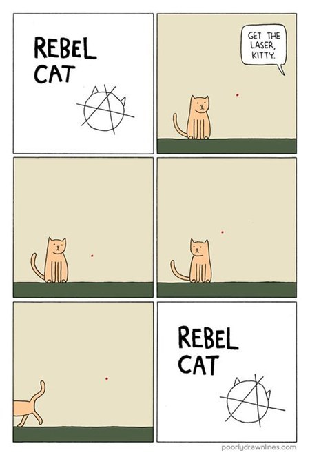 anarchy hardcore rebel laser Cats - 6773257984