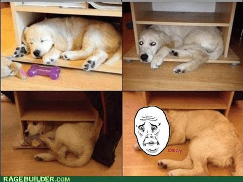 Sad dogs cute Okay - 6773514240
