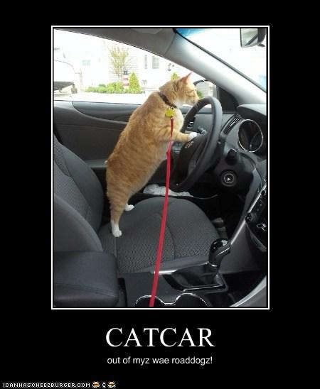 CATCAR out of myz wae roaddogz!