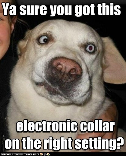 Ya sure you got this electronic collar on the right setting? electronic collar on the right setting?