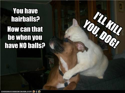 You have hairballs? I'LL KILL YOU, DOG! How can that be when you have NO balls?