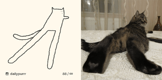 drawing art instagram Photo silly Cats - 6777093