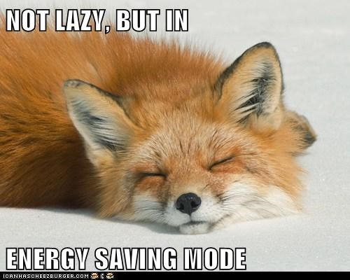 excuse,saving,mode,lazy,fox,sleeping,energy