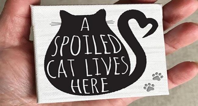 Cute cat | adorable cat signs
