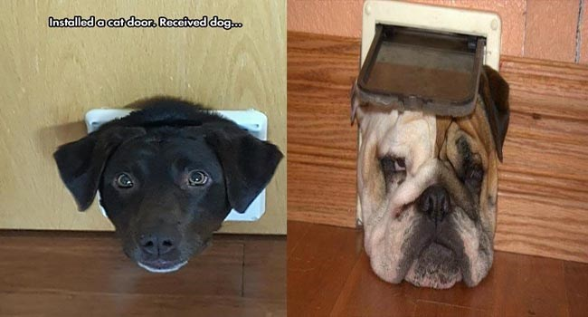 dogs try to fit through a cat door