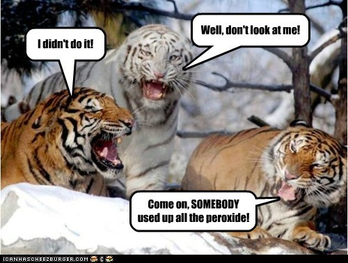 White tiger meme of a bunch of tigers being really bad detectives regarding who used up all the hydrogen peroxide.