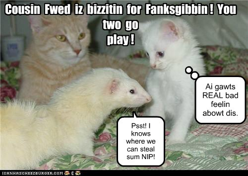 ferret visiting drugs catnip thankgiving family Cats cousin - 6778837504