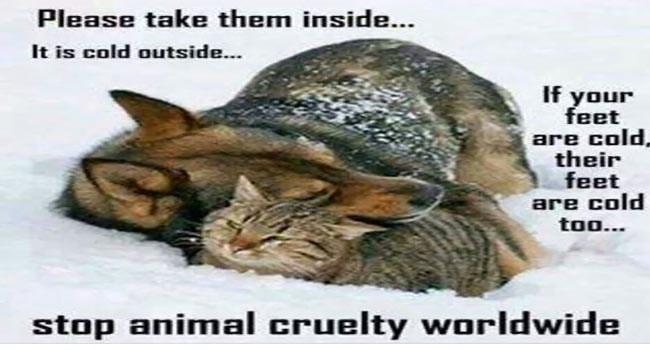 quotes animal cruelty animals - 6780165