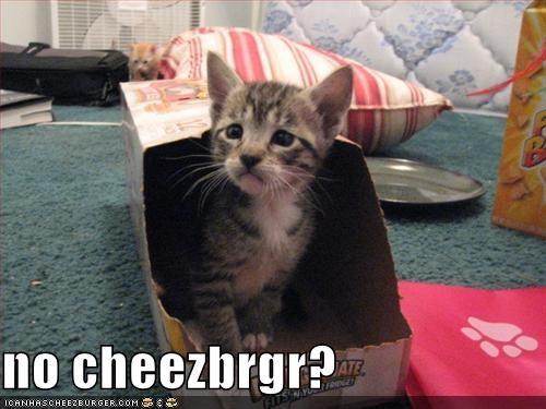 Cheezburger Image 678044928