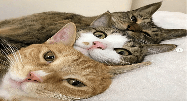 Cute cats | adorable cats napping together
