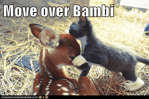 Move over Bambi