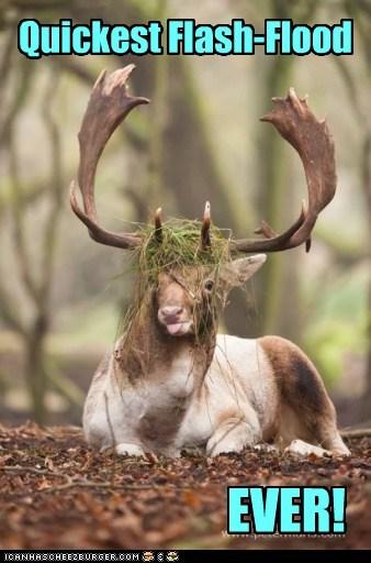 ever grass deer - 6781293824