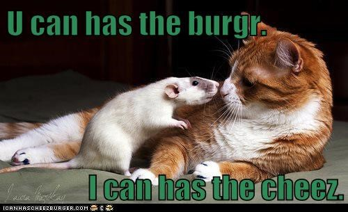 Cheezburger Image 6781338112
