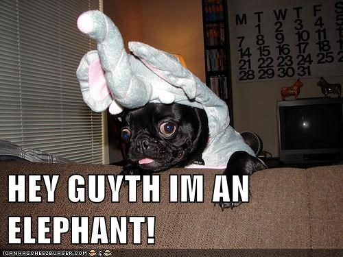 HEY GUYTH IM AN ELEPHANT!