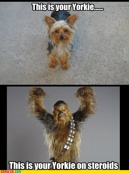 Not Even Once yorkie drug chewbacca wookie dogs - 6781936896