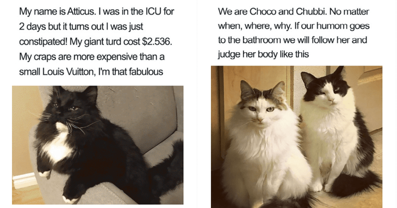 funny memes of cat confessions
