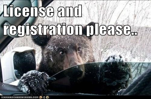car,bears,registration,cop,pulled over,drivers licence