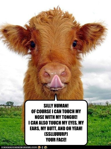 butt face gross human silly licking cows - 6784129536