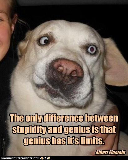 The only difference between stupidity and genius is that genius has it's limits. Albert Einstein