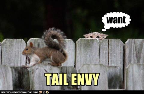 TAIL ENVY