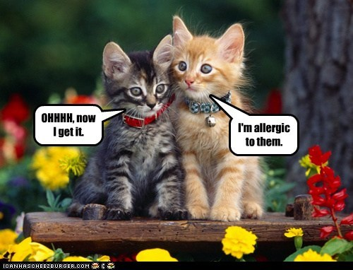 I'm allergic to them. OHHHH, now I get it.
