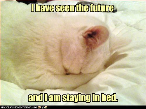 bed,psychic,captions,future,Cats