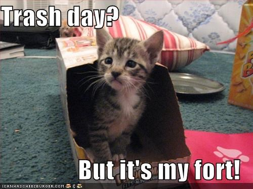 boxcat,fort,kitten,lolcats,lolkittehs,trash day