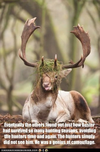 grass,surviving,deer,hunters,camouflage,genius