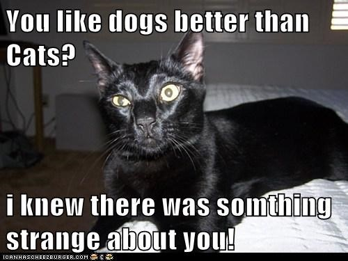 You like dogs better than Cats? i knew there was somthing strange about you!