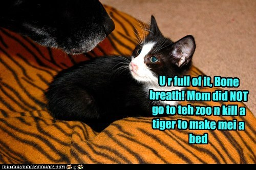 U r full of it, Bone breath! Mom did NOT go to teh zoo n kill a tiger to make mei a bed