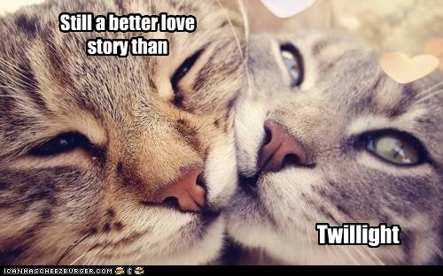 romance captions love story twilight love Cats - 6786286592