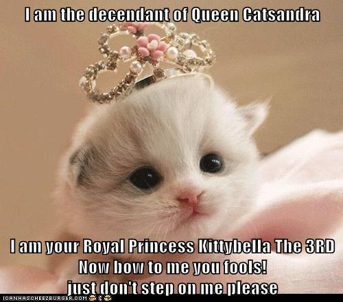 I am the decendant of Queen Catsandra  I am your Royal Princess Kittybella The 3RD Now bow to me you fools!                                       just don't step on me please