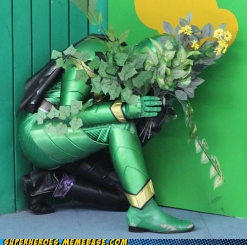 Super Sentai disguise leafs kamen rider