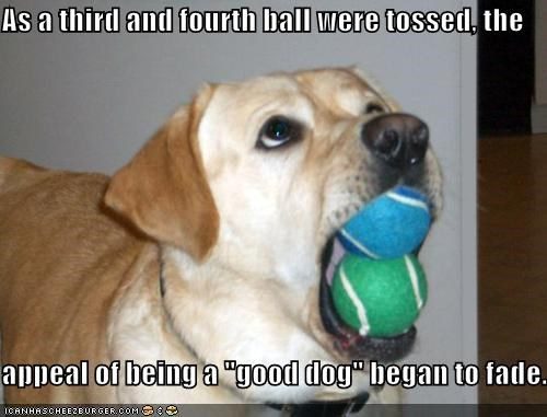 "As a third and fourth ball were tossed, the  appeal of being a ""good dog"" began to fade."