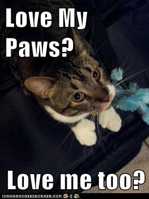 Love My Paws?  Love me too?