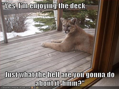 """Yes, I'm enjoying the deck, Just what the hell are you gonna do about it, hmm?"""