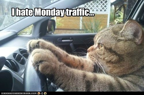 drive car captions mondays Cats traffic - 6787097088