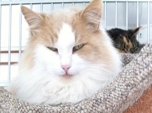 SOON Cats animals - 6787239424