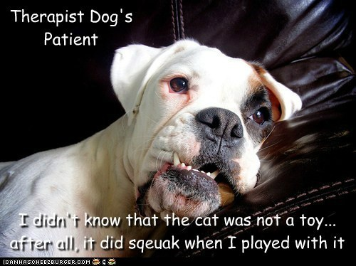 Therapist Dog's Patient I didn't know that the cat was not a toy... after all, it did sqeuak when I played with it
