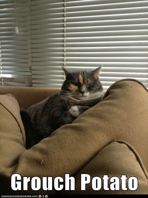 lazy couch captions potato couch potato Cats grouch - 6787496704