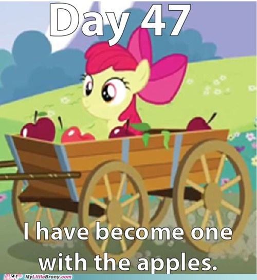 they don't even notice,apple bloom,apples