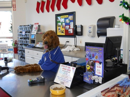 dog shopkeeper,store owner,shopkeeper,dog cashier,dog store owner,dog store