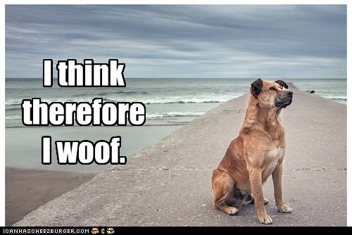 dogs beach philosophy i think therefore i am what breed