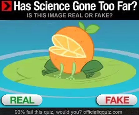 orange real or fake seems legit - 6788014336