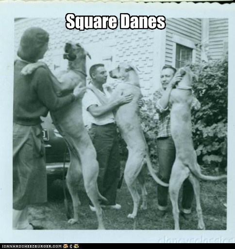 dogs,great danes,puns,dance