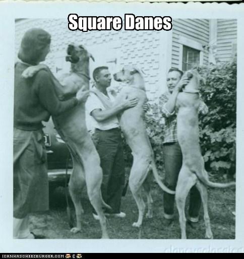 dogs great danes puns dance - 6788084736