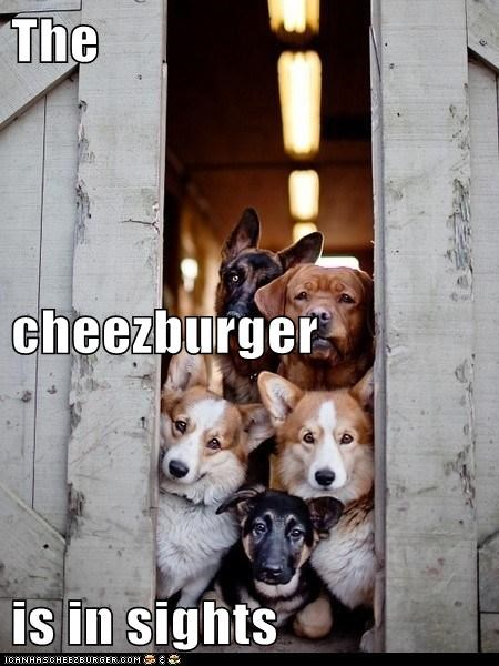 Cheezburger Image 6788106240