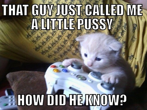 gamer,kitten,xbox live,gaming,called shot,double meaning,Cats,literalism