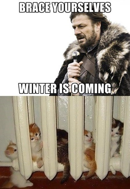 kitten Winter Is Coming Game of Thrones brace yourselves heater - 6788260096