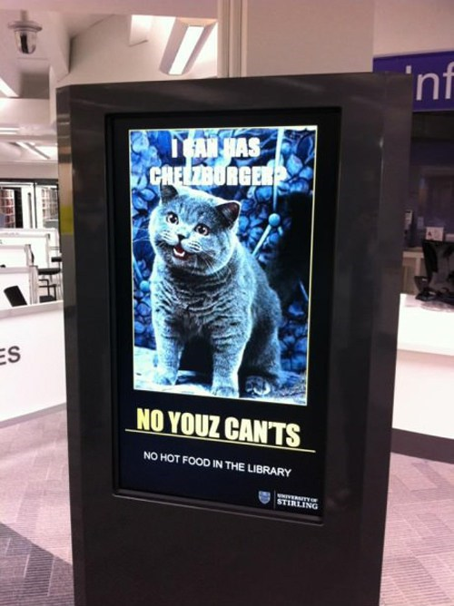 lolcats IRL happy cat - 6788325888